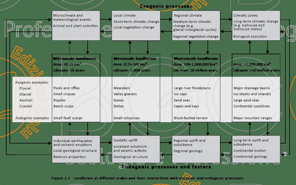 Scala spaziale e temporale dei processi esogeni e endogeni